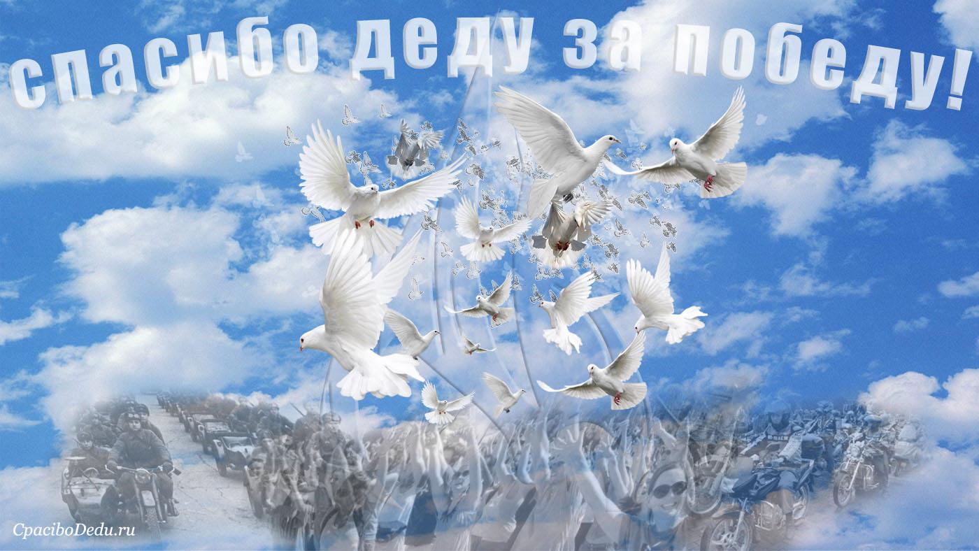 картинки с днем мира с голубями обошлось без обязательного